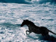 Koń w wodzie