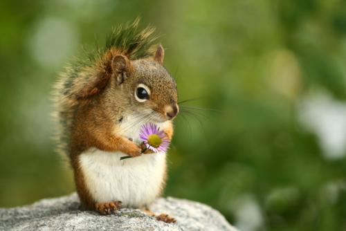 Wiewiórka z kwiatkiem