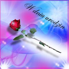 W dniu urodzin - piękna róża