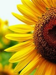 Pół kwiata