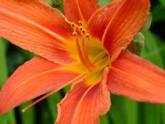Kwiatuszek