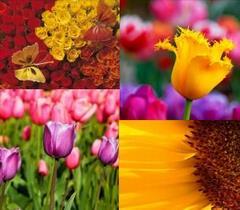 Różne kwiatki