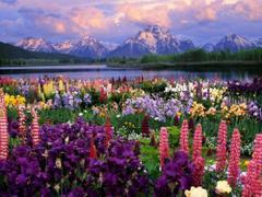 Góry i kwiaty