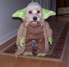 Pies w przebraniu