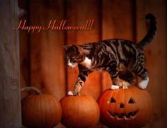 Happy Halloween ! z kotem