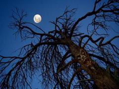Drzewo potwór