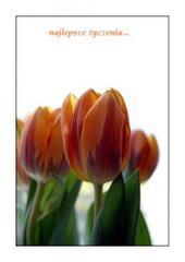 Najlepsze życzenia - tulipany