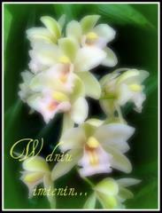 W dniu imienin - kwiatki