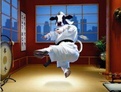 Kung Fu krowa