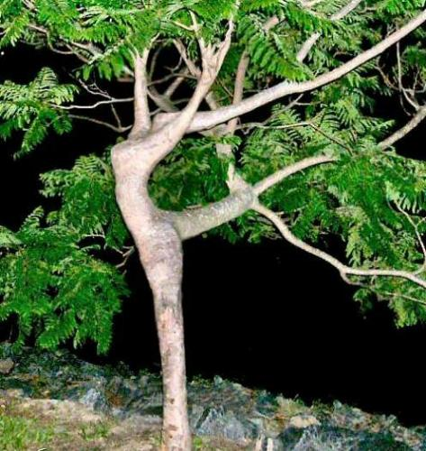 Inne drzewo