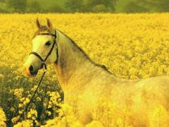 Inny koń