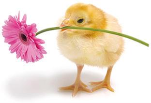 Kwiatek na Wielkanoc