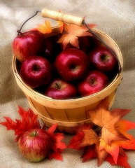 Jabłka w wiaderku