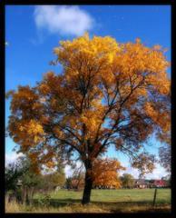Jesienna kartka