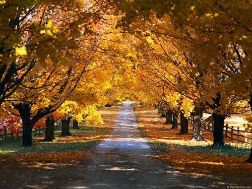 Droga przez park