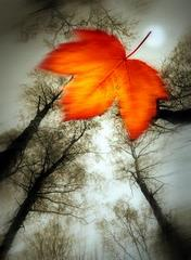 Brązowy liść