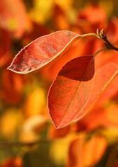 Brązowy liść wśród liści