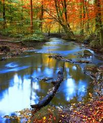 Leśne bajorko