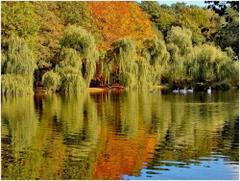 Jesień nad wodą