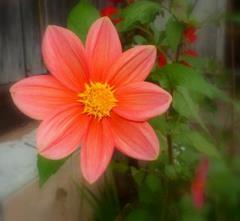 Kwiat jesienią