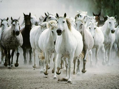 Galopujące konie