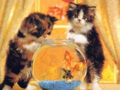 Patrz rybki