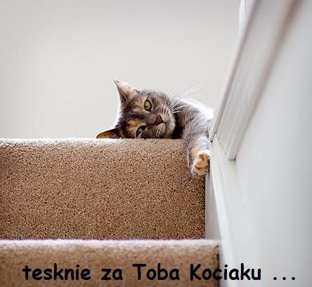 Tęsknię za Tobą kociaku...