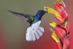 Kwiat i ptak