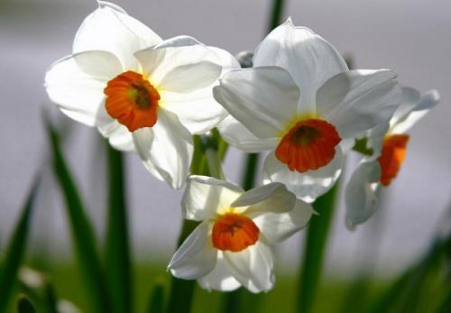 Piękne biało pomarańczowe kwiatki