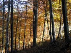 Piękny las