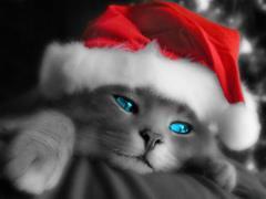 Kotek w czapce mikołaja