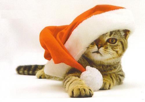 Kot w czapce