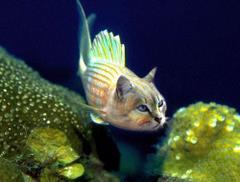 Rybo-kot