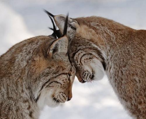 Przytul...