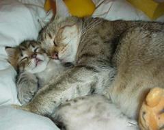 Tulące się kotki