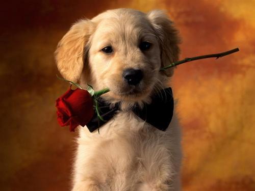 Dla Ciebie róża