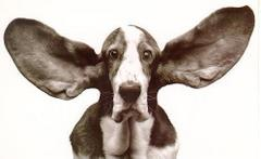 Ale mam uszy