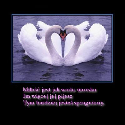 Miłość jest jak woda morska...