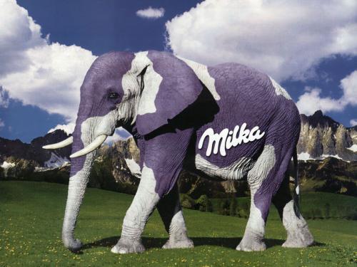 Słoń milka