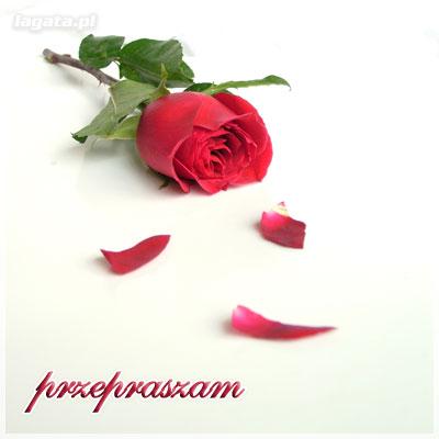 Przepraszam róża