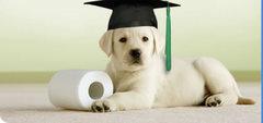 Pies student