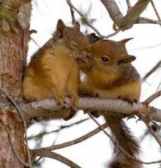 Lubię Cie wiewiórko