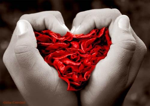Płatki róż w dłoni...