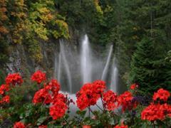 Wodospad i kwiatki