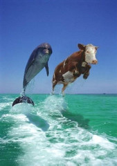 Wieloryb i krowa