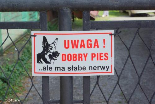 Uwaga dobry pies