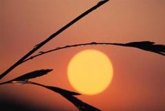 Słońce po deszczu