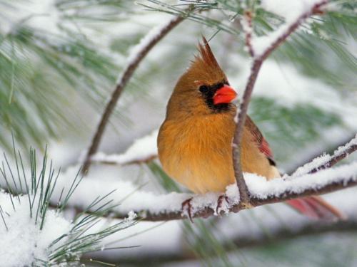 Ptaszek zimą